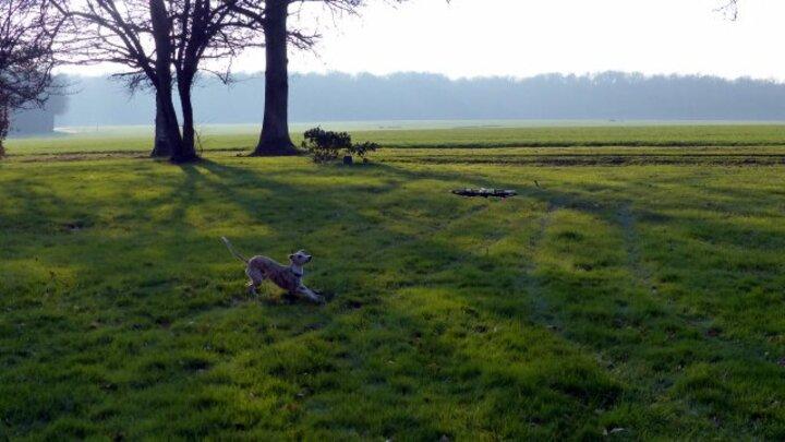 Mowgli et le drone