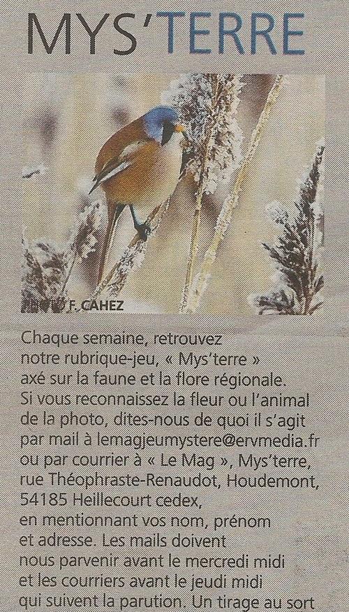 L'animal Mys-TERRE du 05/02.