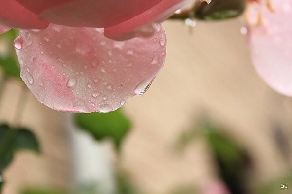 macros-fleurs 4746