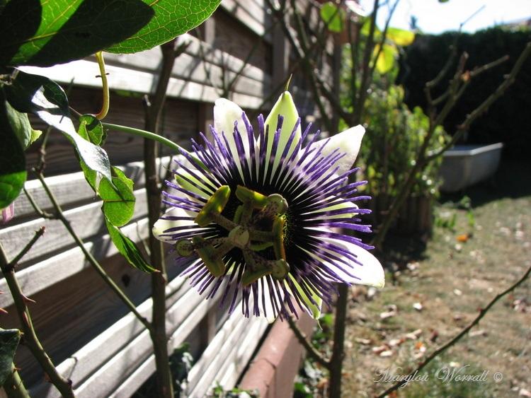Ingersheim : Il a fait beau au jardin