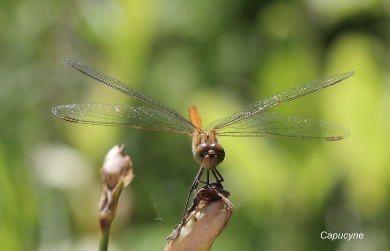 libellules 9745