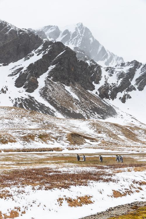 Grytviken, suite et fin