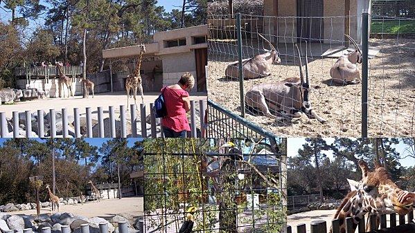 2012-03-26-zoo2.jpg