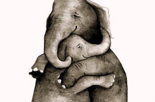 elephant-calin