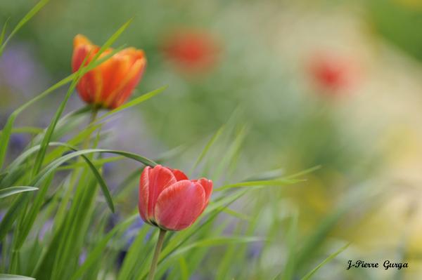 Florilège de pétales et de fruits , toujours de superbes photos de Jean-Pierre Gurga...