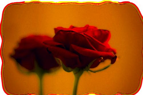 tube rose(fleur)