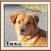 Bianca 4