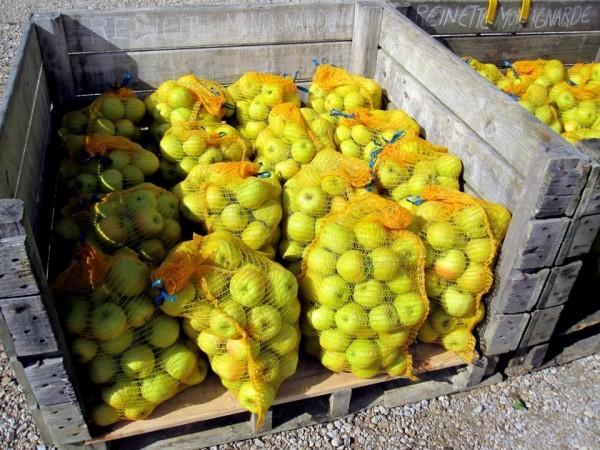 dz08 - Pomme dans les sacs