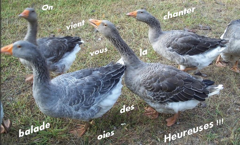 """"""" BD"""" des oies et Cèpes ..."""