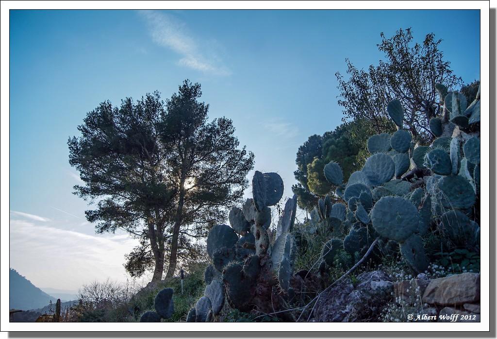 Toulon (Le Revest ) en hiver (1)