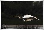 Galerie Oiseaux (2013/3)