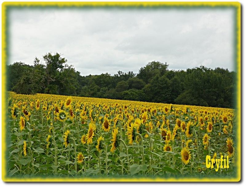 Du soleil dans les champs