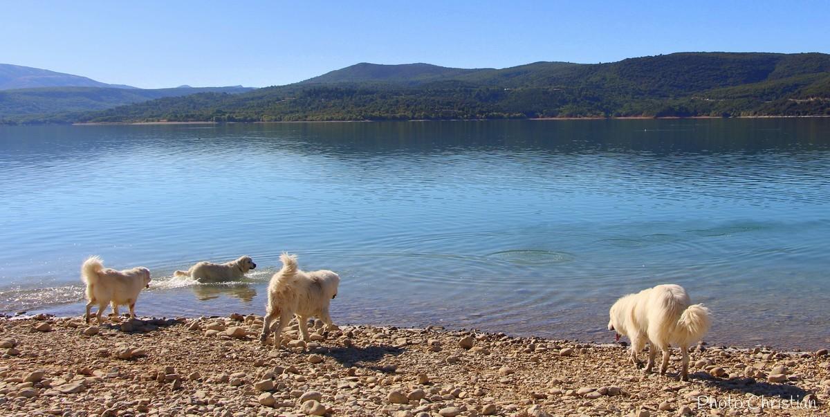 Les grands blancs au lac