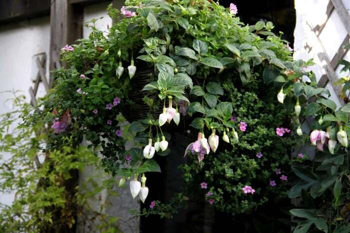 Hanging baskets : le bilan (9/9)