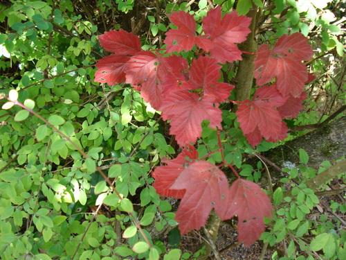 La feuille d'automne emportée par le vent....
