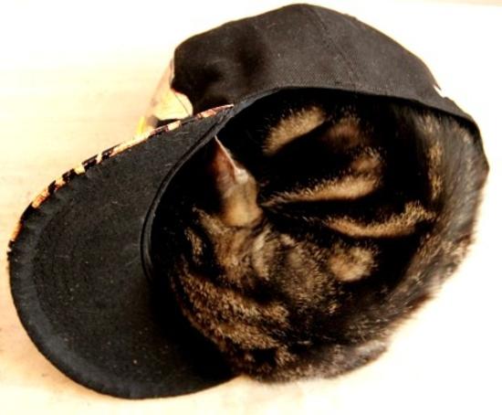 chat dans casquette
