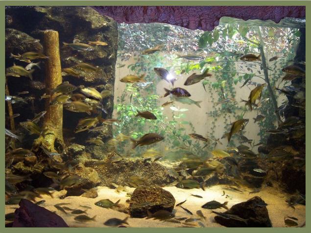 Aquarium du Périgord Noir 24260 Le Bugue
