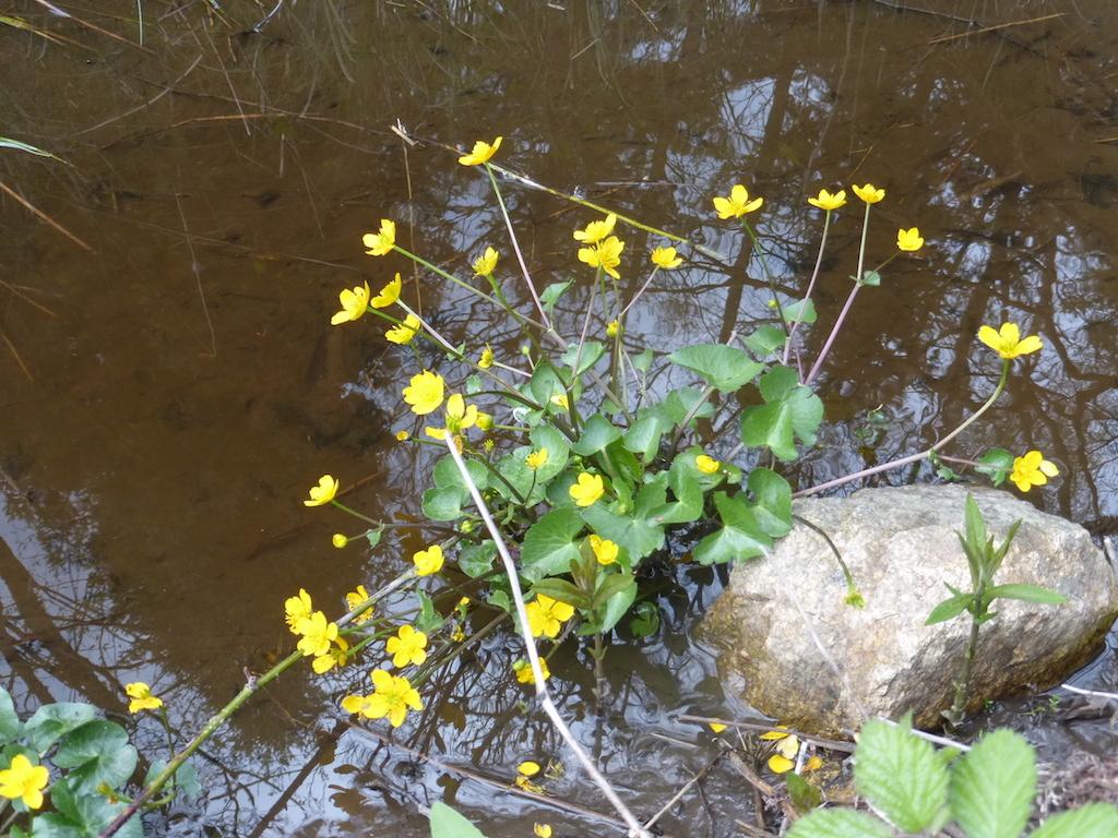 Les fleurs de la balade du 26 avril.