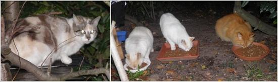 montage chats du peyrat