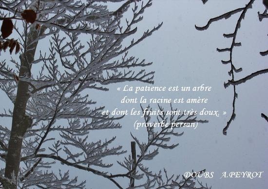 Citations En Images La Patience Le Monde De La Philo Et