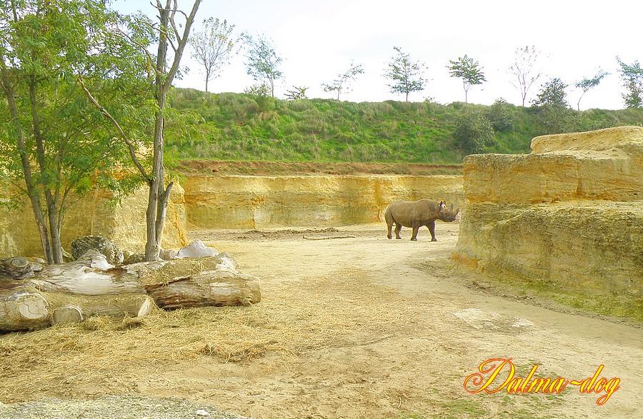 parc des rhinoceros