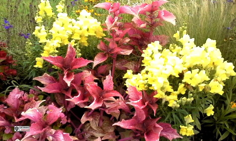 des jardins magnifiques pris sur le vif ,un règal pour les yeux,entre Langon et Loupiac