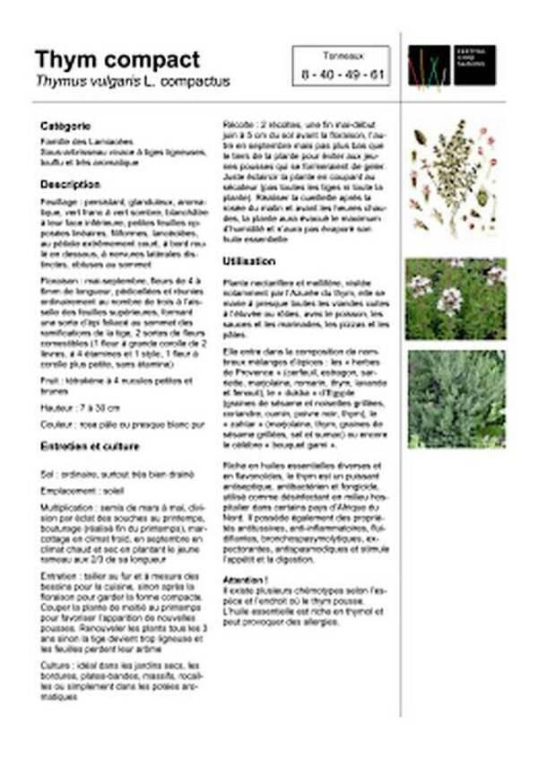 Vertus médicinales des plantes sauvages : Thym