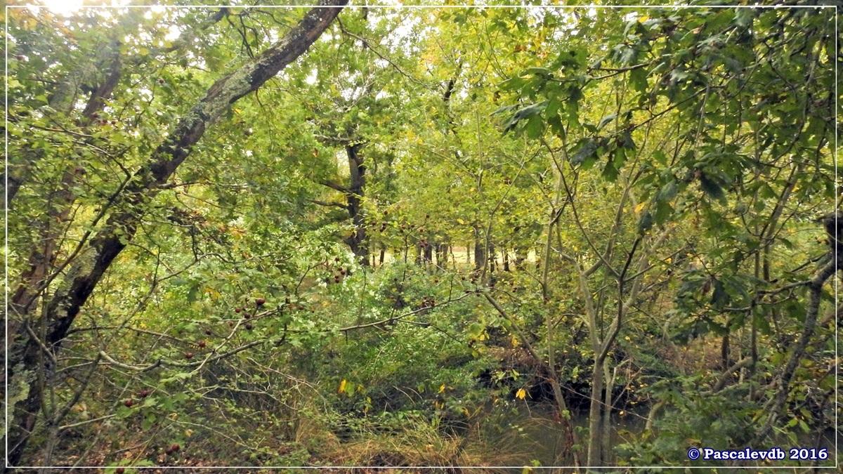 Plaines du Teich et domaine de Fleury - Octobre 2016 - 12/13