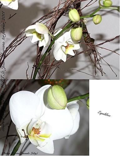 2011 01 02 equilibre (orchidée 2)