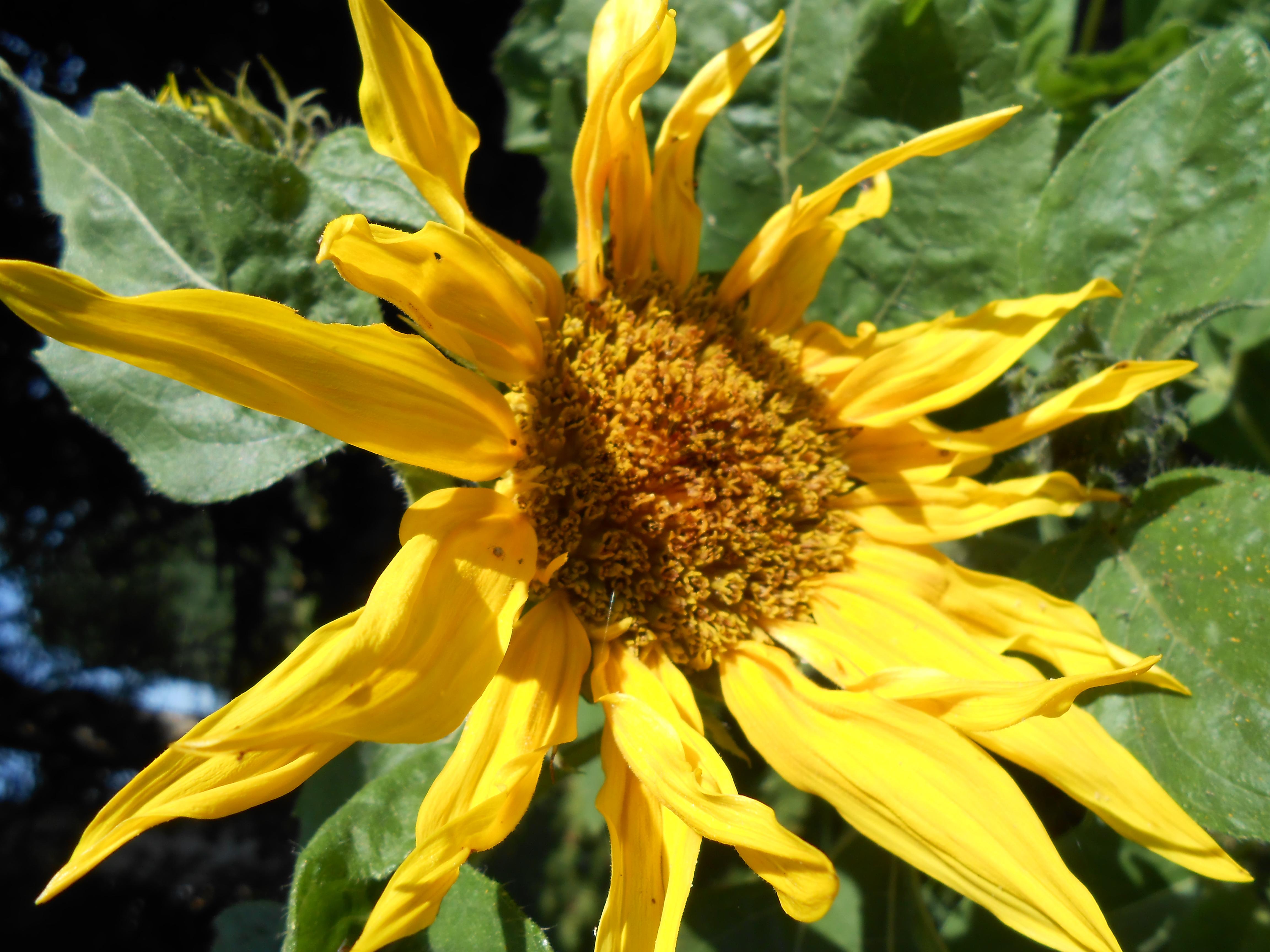 Les fleurs au potager le jardin de mamini for Fleurs au jardin