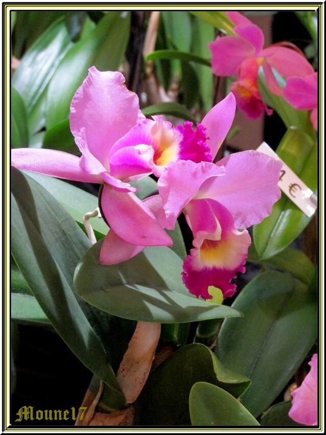 Exposition d'orchidées à Segonzac en charente