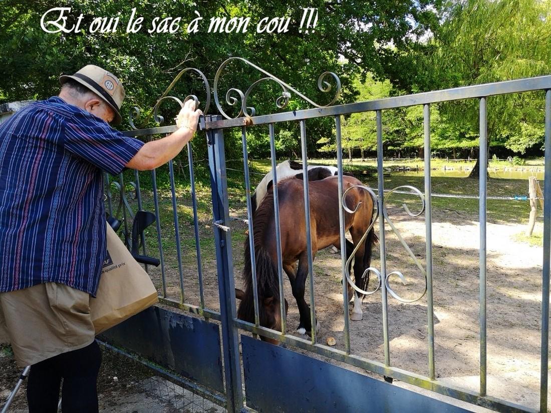 Les chevaux et tithom