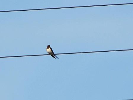 les-oiseaux-et-autres-volatiles 0676