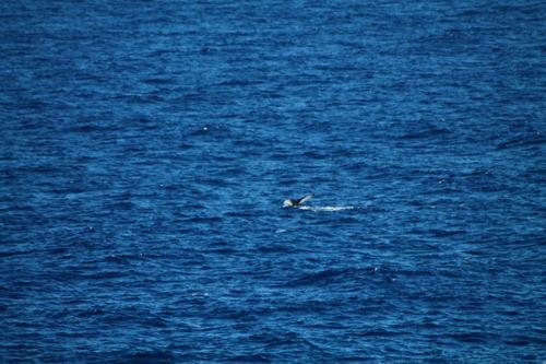baleine à la pointe des châteaux