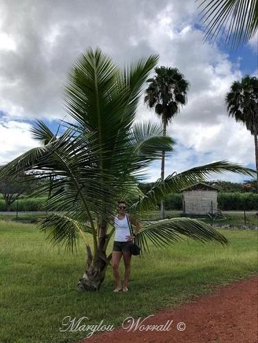 La Martinique : Habitation Clément
