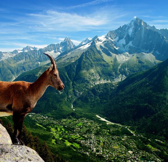 Bonjour....      Chamonix Mont Blanc