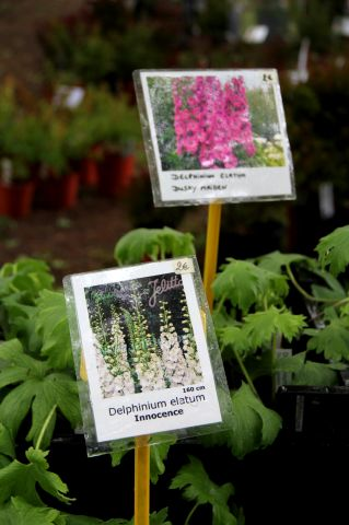 Hex - Garden & Plant Show 2017 featuring Warren Millington