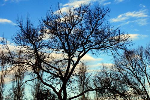 Branches nues d'hiver le soir ...
