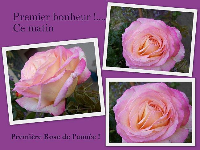 rose-29-04-1.jpg