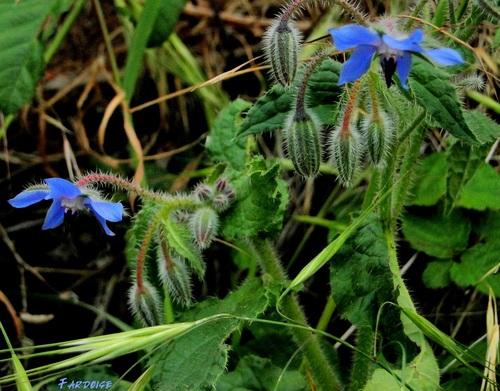 Quelle est cette plante aux fleurs caractéristiques ?