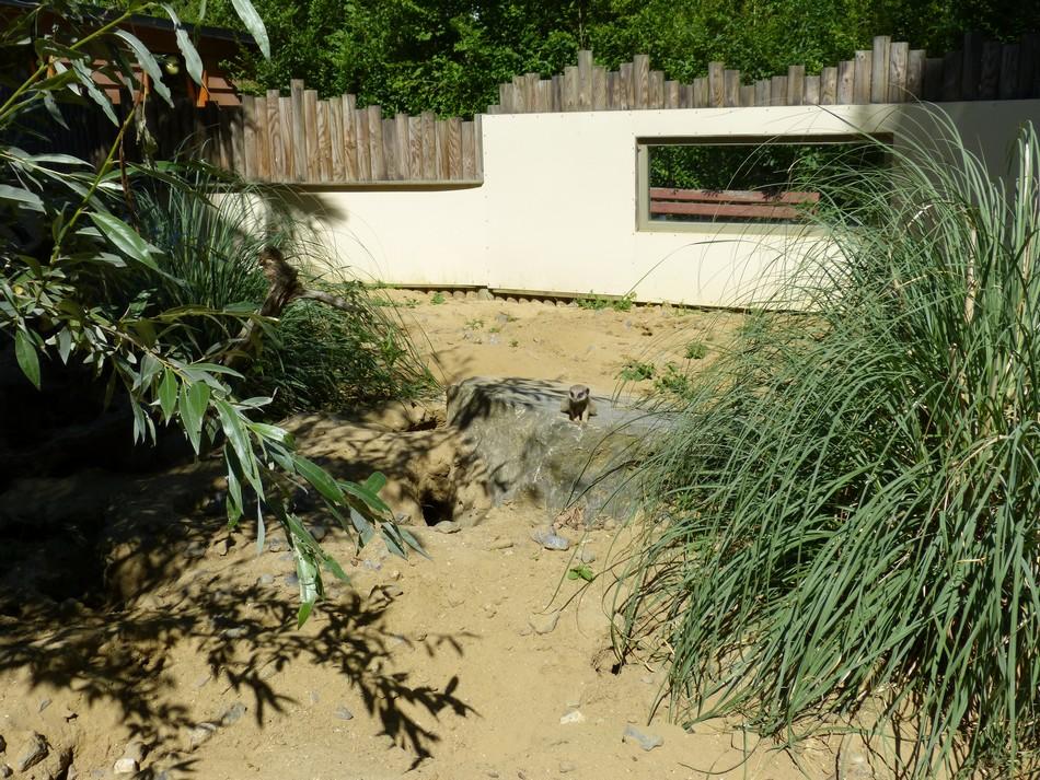 Coup de foudre au zoo d'Amiens (2)