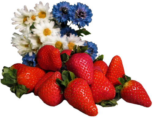 Fruits / 3