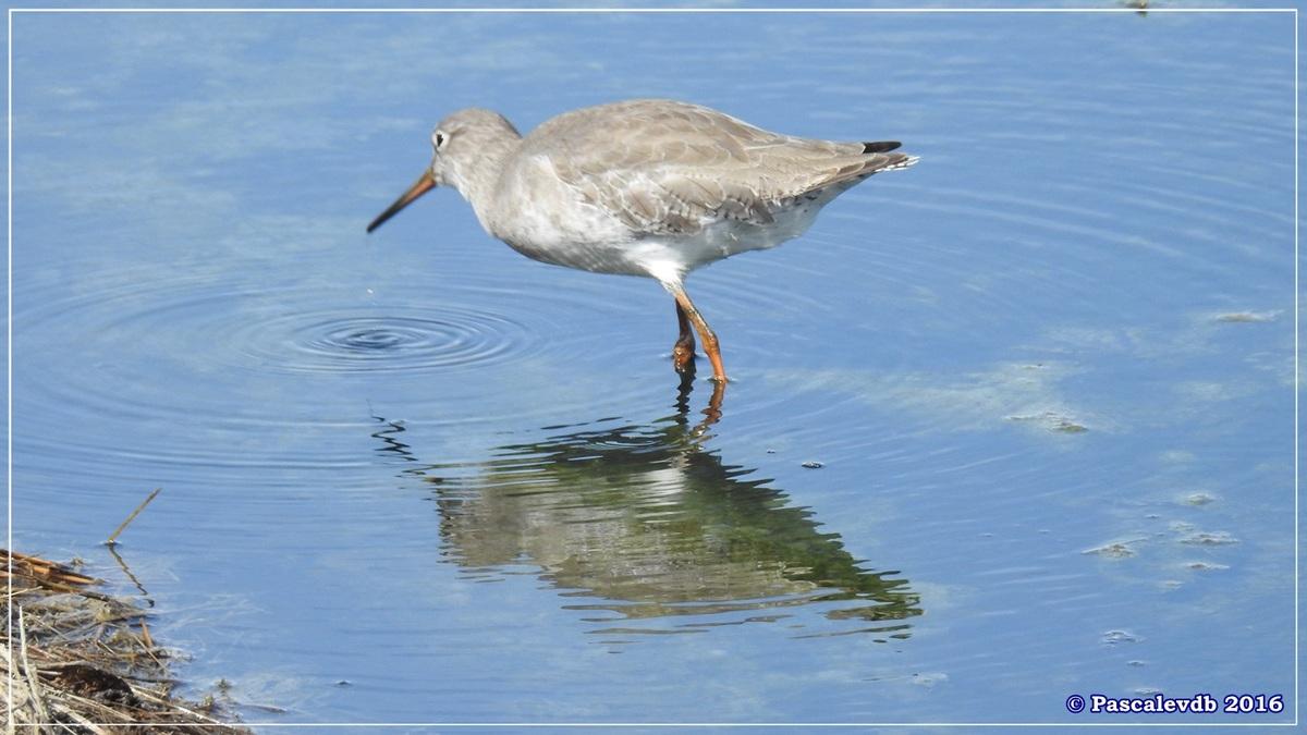 Réserve ornitho du Teich - Septembre 2016 - 3/11