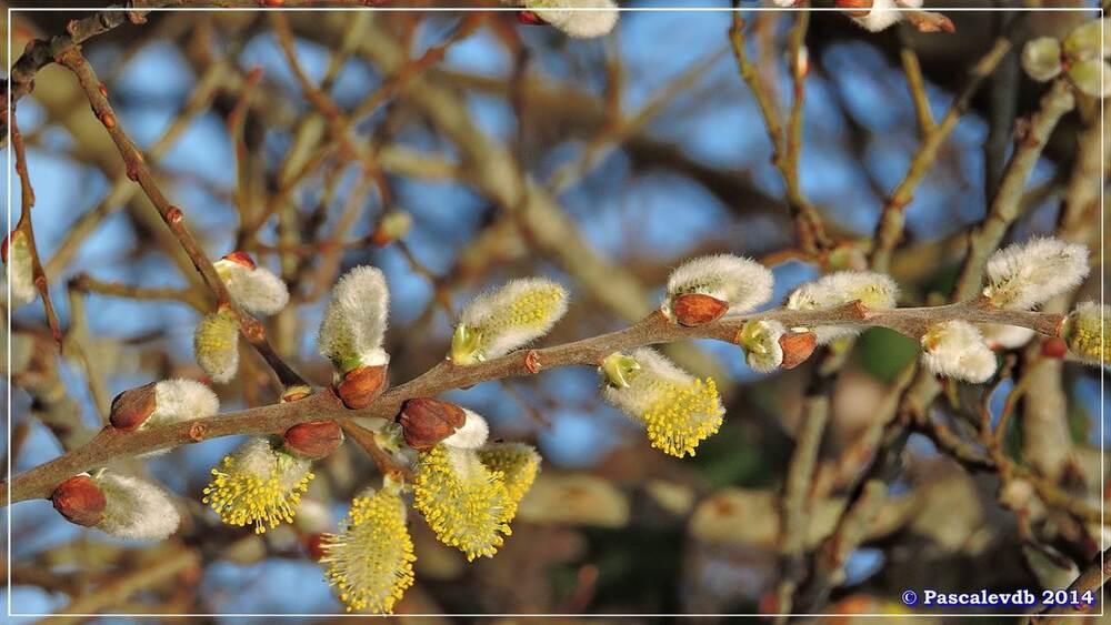 Les prémices du printemps - 4/4