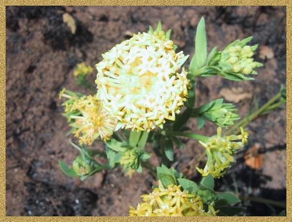 Parc national de l'Upemba:flore