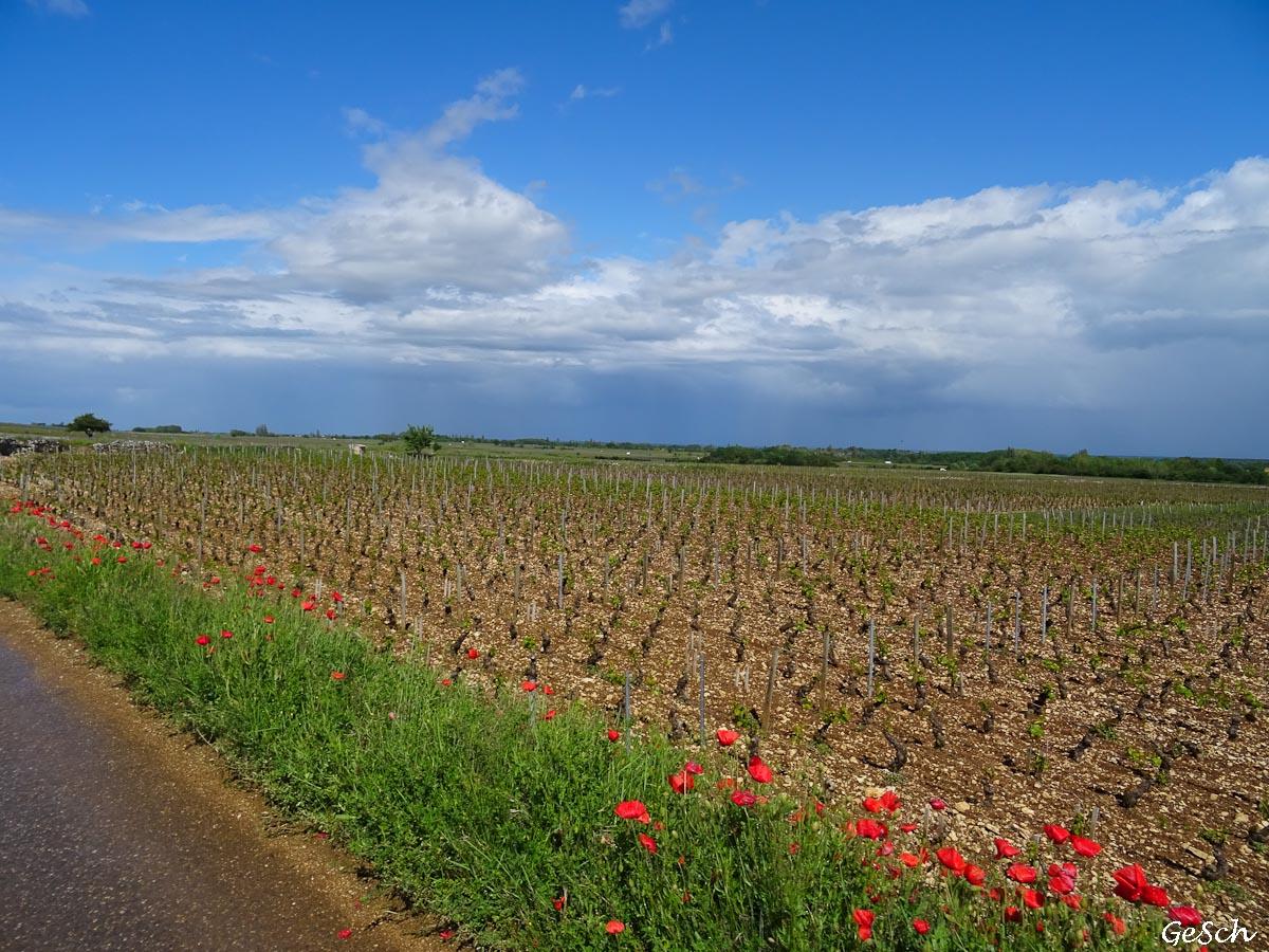 véloroute 6 vélo belfort besancon chalons bourgogne franche comté beaune dijon grands crus
