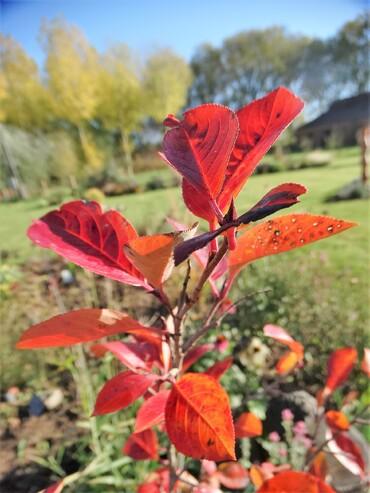 Le nouveau jardin: plantations et 1ères couleurs d'automne