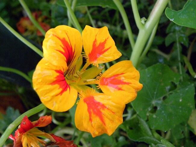 Les dernières fleurs