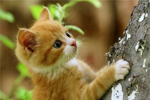chaton-arbre.jpg