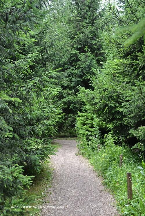 Jardins Albert Kahn : La Forêt Vosgienne